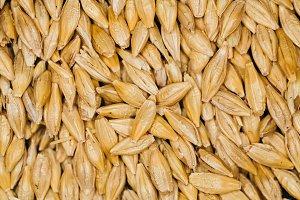 lot of fresh grains wheat close-up