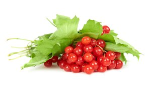 Bunch of red berries