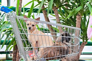 Dogs In The Cart