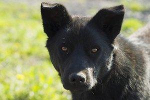 Black Dog sunny day