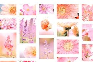 Macro Flower Photos Bundle!!!!!