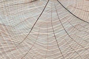 Sawed Wood Texture