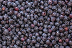 Close up of blueberries or blueberry