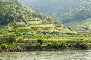 Wachau valley vineyards in Austria