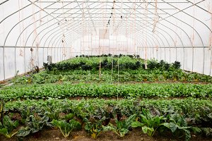 Beautiful Greenhouse