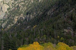 Yellow Aspens // CO