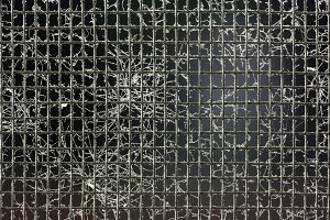 Mosquito on wire screen