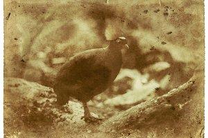 Exotic Bird Vintage Photo