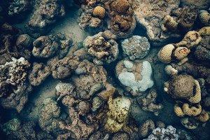 Exposed Corals