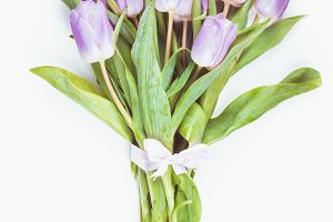 Lilac tulips isolated