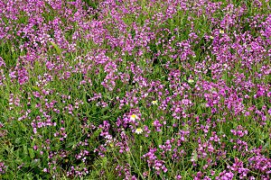 wild flowers spring meadow