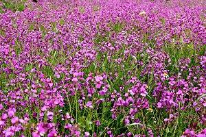 spring wild flowers meadow
