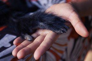 Friendship Between Human Monkey, Handshake. Protection of endangered animals.