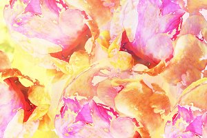 Peony Watercolour Flower Texture
