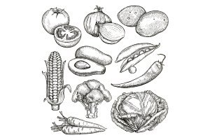 Vegetables, sketches