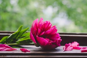 Beautiful peonies on wooden surface