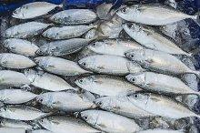 Fresh fish in market