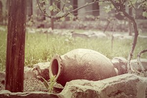 clay jug in the vineyard