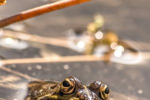 No Far Frog