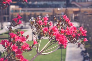 Red flower blossom in hot season