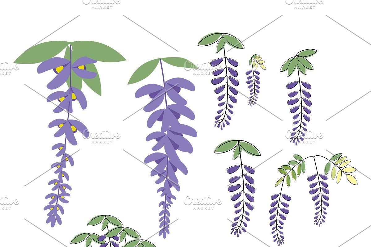 Wisteria Flower Illustrations Set Custom Designed Illustrations