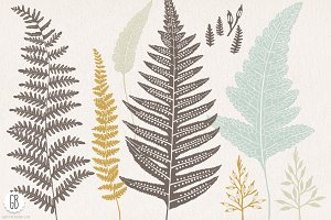 Fern, botanical vector graphics