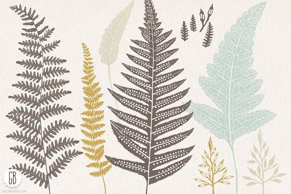Fern, botanical vector graphics