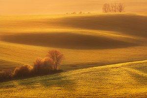 Spring landscape in South Moravia