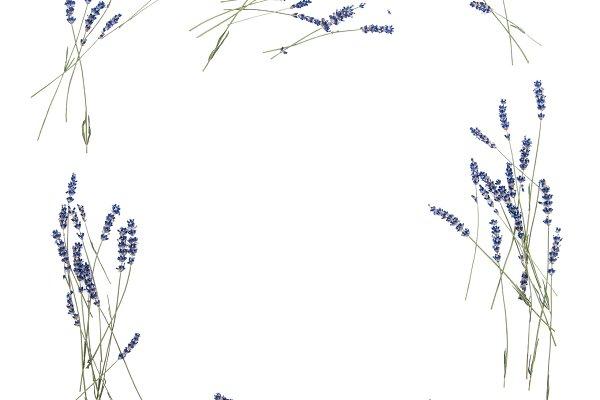 Lavender flowers. Floral frame