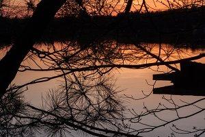 Orange branches