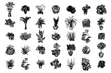 Home plants sketch illustration set