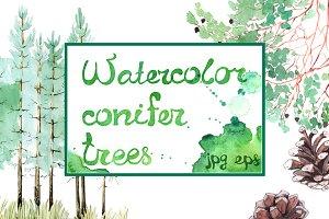 Watercolor pines, branches, cones
