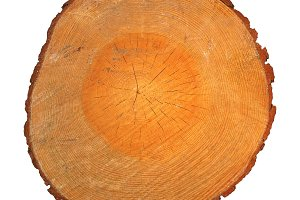 Wood section with growth rings isolated