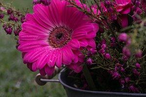 Pail of Pink