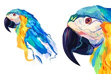 Parrot  (Birds set. Vector)