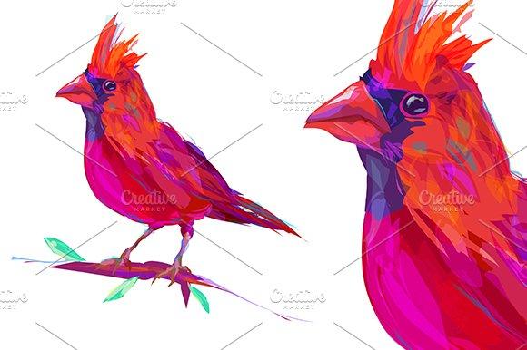 Red Cardinal (Birds set. Vector)