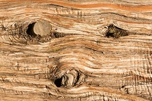 Detail wood of trunk of tree