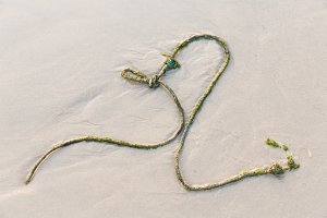 Old rope on beach