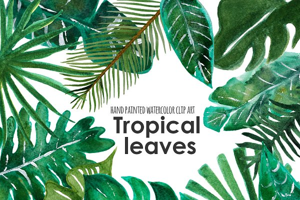 Palm leaf tropical clip art