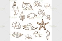 Sea shells. Brown and white