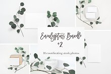 Stock Photos | Eucalyptus Bundle #2