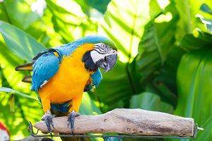 Parrot in garden