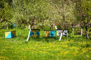 bee, farm, honey, apiary, beekeeping, hive, meadow, house, summer, nature, production, countryside, green, agriculture