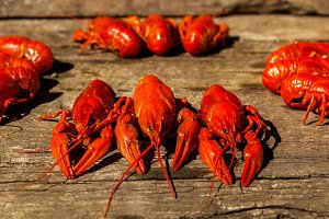 Cancers to beer, dill, boiled crawfish, beer snacks, pub, texture, crayfish, sea crayfish