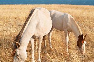 Family of white horses