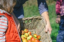 Woman putting apples in basket and little girl looking