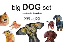 big dog set. Dachshund and Shiba Inu