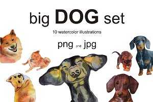 big dog set. Dachshund and Shiba Inu