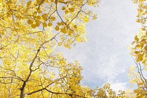 Sky of Yellow
