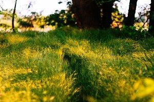 Grass-path